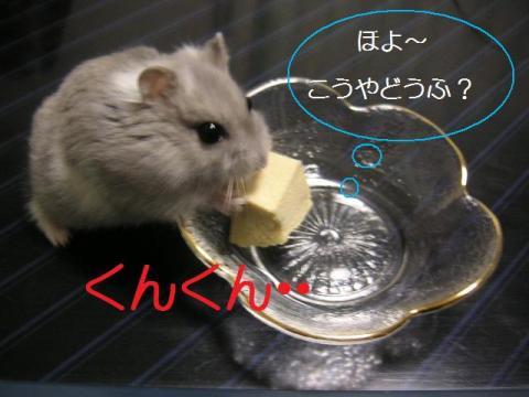 初高野豆腐