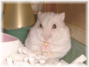 松の実を食べるハヤトくん