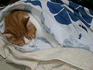 どこでも寝る!