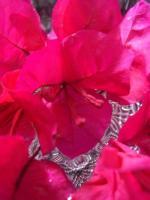 赤だと思ったらピンクだったブーゲンビリア