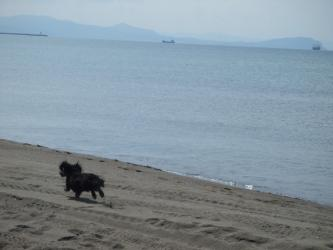 海辺でGO!