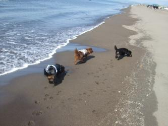 海辺の3ワン
