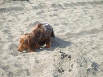 砂浜はどんなにおい?
