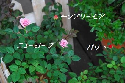 4_20090929160545.jpg