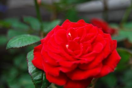 5_20090522111537.jpg