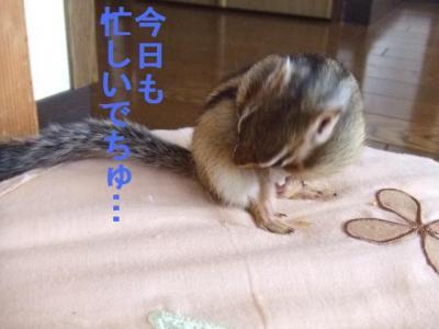 ウリの日常5