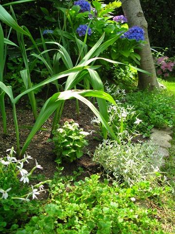 北向きメイン花壇の夏