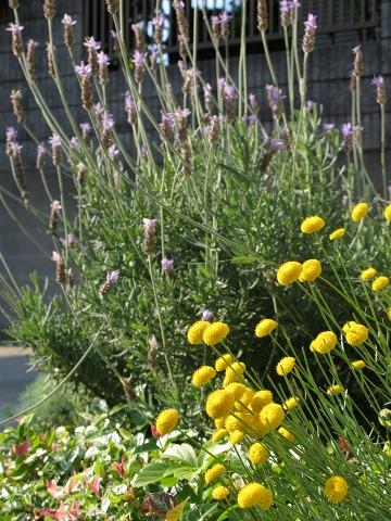初夏の西向き花壇
