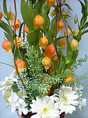 サンダーソニアのアレンジ
