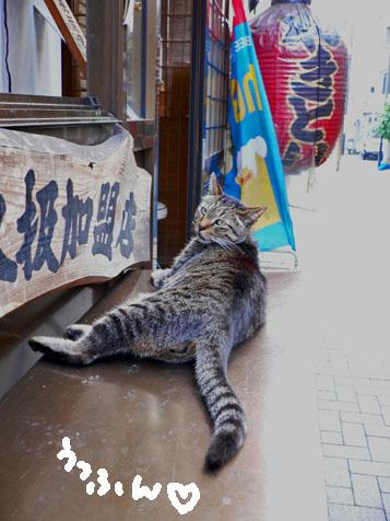 裏門通りネコさん