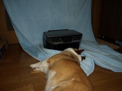 撮影妨害犬?