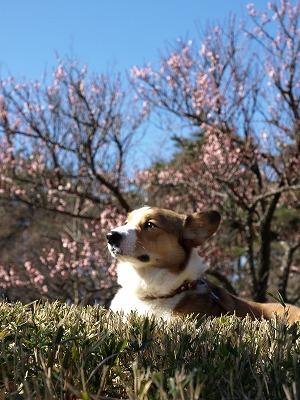 なかなかにモデル犬☆