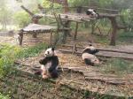 kuturogi-panda.jpg