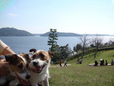 モモミミ浜名湖