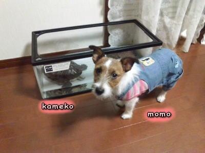 kameko,