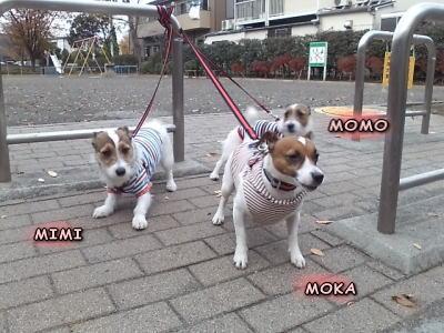 moka,momo,mimi
