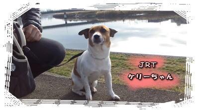 鶴見川、ケリーちゃん