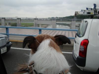 モモ多摩川
