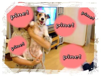 pine!pine!pine!