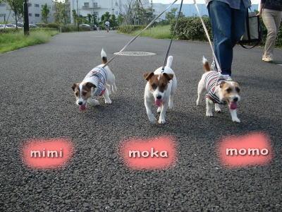 モカ、モモ、ミミ