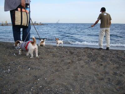 モカモモミミで海岸