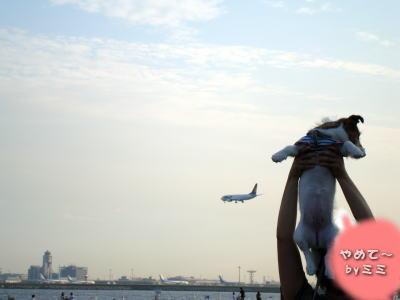 ミミと飛行機2