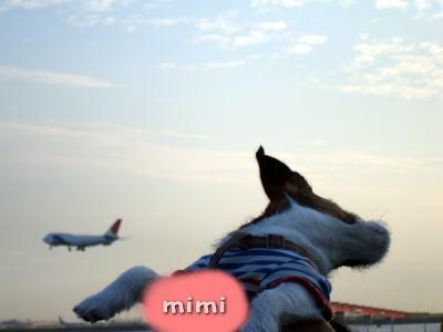 ミミと飛行機