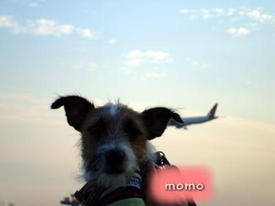 momoと飛行機