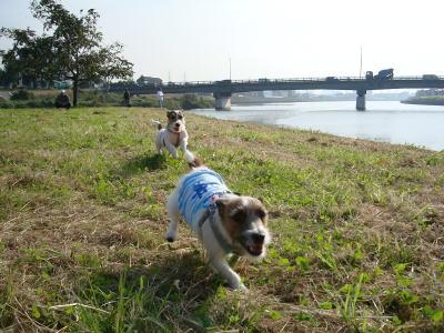 モモミミ競争、鶴見川