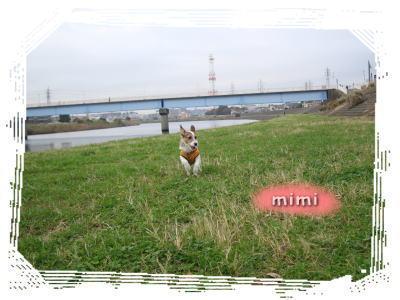 鶴見川おさんぽミミ