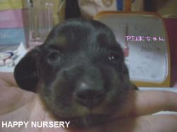 v.pink2.jpg