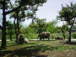 ほのぼの羊