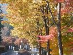 伊奈ヶ湖の紅葉1