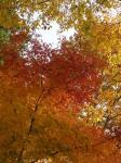 伊奈ヶ湖の紅葉2