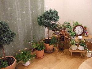 植物園コーナー