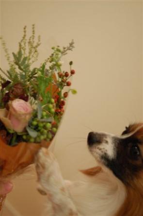 20061120-flower.jpg
