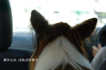 DSC_20060821.jpg