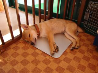 子犬な寝顔