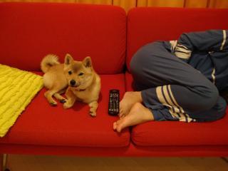 今日はお疲れみたいね。