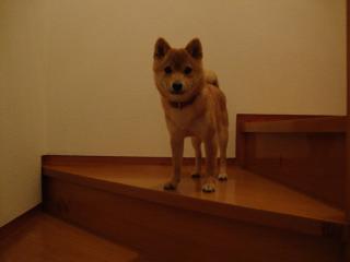階段も楽勝だぃ。