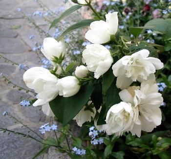 濁りのない美しい白