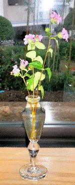 ランタナの花と
