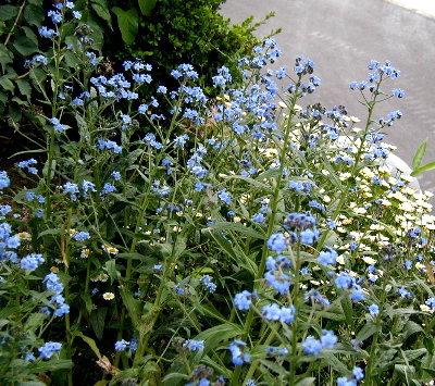 開墾地に咲いた花