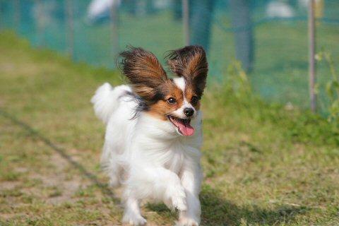 dogtime20080527030607.jpg