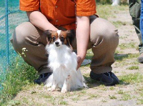 dogtime20080528141732.jpg