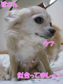 IMG_1228-1.jpg