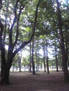 Image0321_convert_20080805102634.jpg