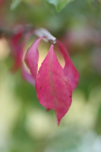 山ぼうし 紅葉