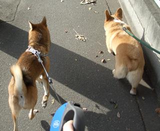 並んでお散歩ヽ(´▽`)ノ