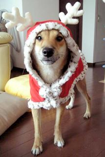 クリスマス仕様だワン